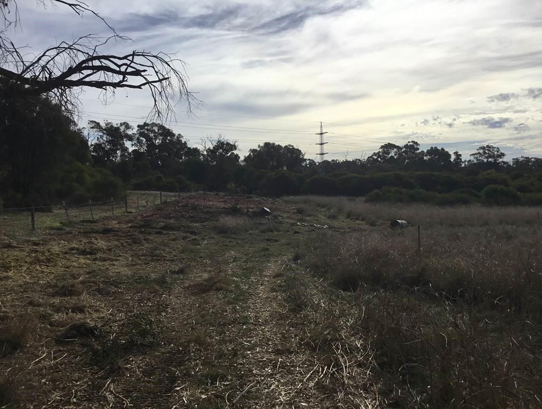 forestry_mulching3